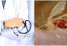 Do mosquito flies spread Corona Virus? Know the truth
